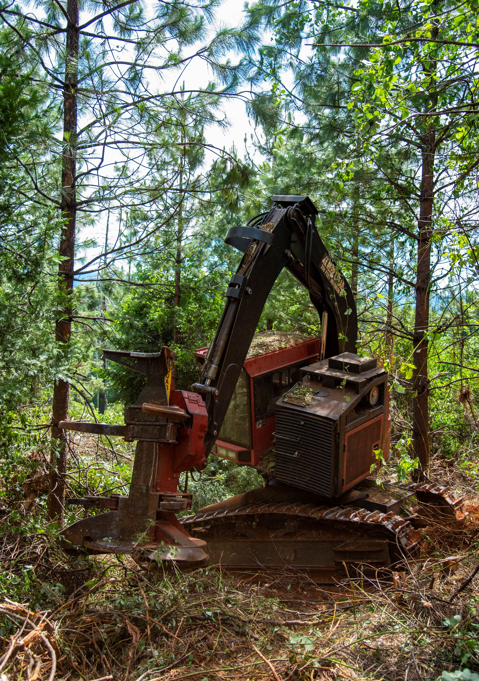 A photo of a masticator cutting trees in the forest.